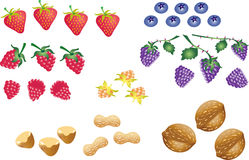Fruit berries and nuts. A vector illustration of some berries,strawberry,raspberry,blackberry,blueberry,cloudberry, and also some nuts including peanut,walnut Stock Image