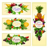 Fruit and berry banner for diet food, drink design Stock Photography
