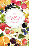 Fruit and berry banner. Vector fruit and berry banner. Design for juice, tea, ice cream, jam, natural cosmetics, sweets and pastries filled with fruit, dessert Royalty Free Stock Photo