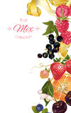 Fruit and berry banner royalty free illustration