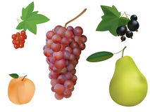 Fruit and berry collection. Royalty Free Stock Photography
