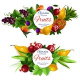 Fruit and berry food labels. Fruit labels, tropical garden berry and green leaves. Pineapple, mango and lemon, grape, pear and plum, peach and pomegranate round royalty free illustration