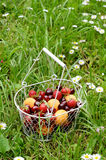Fruit and berry mix in wire basket Royalty Free Stock Images