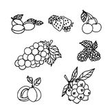 Fruits Sketch Stock Images