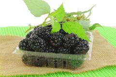 Fruit Black berry in container Royalty Free Stock Image