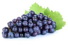 Fruit bleu de fruits de raisins d'isolement sur le blanc photos stock