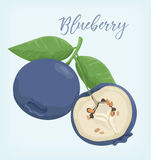 A Fruit Blueberry with Slice vektor Royalty Free Stock Images