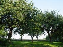 fruit boomgaard royalty-vrije stock foto