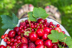 Fruit bowl full cherries currants Stock Photography
