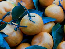 Fruit box with tangerines and green leaves Royalty Free Stock Images