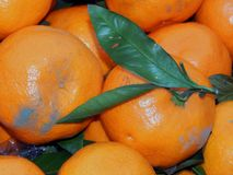 Fruit box with tangerines and green leaves Royalty Free Stock Photos
