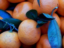 Fruit box with tangerines and green leaves Stock Photography