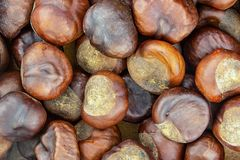 Fruit brown chestnut edible closeup many fruits large mouth-watering source protein edible stock photo