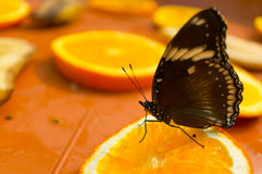 Fruit and butterfly Royalty Free Stock Photo