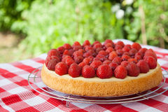 Fruit cake with strawberries and red currants on a table Royalty Free Stock Photo