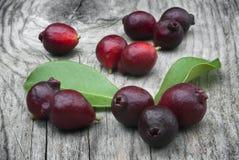 Fruit of Cattley guava or Peruvian guava (Psidium littorale susp Stock Images