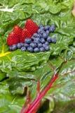 Fruit on chard. Stock Image