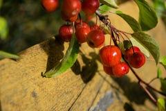 Fruit, Cherry, Berry, Plant stock photography
