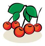 Fruit, Cherry Stock Photography