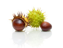 Fruit chestnut closeup on a white background with reflection Stock Photo