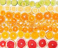 Fruit citrus background. Top view. Stock Photos