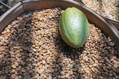 The fruit of the cocoa in coffee beans Royalty Free Stock Images
