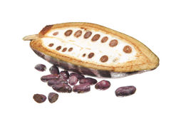 Fruit of the cocoa tree Stock Images
