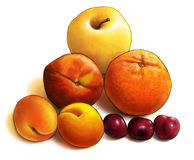 Fruit composition Royalty Free Stock Photos