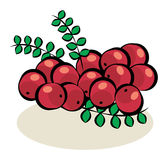Fruit, Cranberries Royalty Free Stock Photo