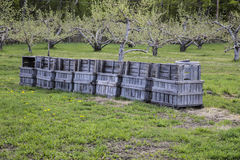 Fruit crates in an apple orchard Stock Photo