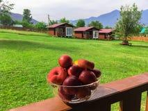 Fruit peaches stock photography