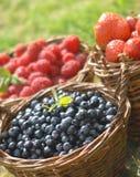 Fruit d'été photographie stock libre de droits