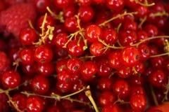 Fruit d'été Photo stock