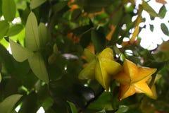 Fruit d'étoile Photos stock