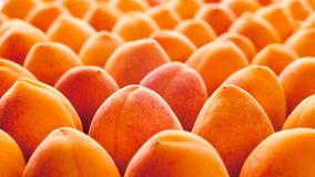 Fruit d'abricot Photographie stock
