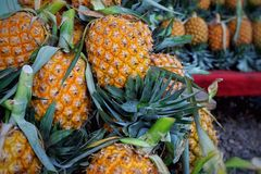 Fruit d'ananas Images libres de droits