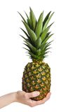 Fruit d'ananas de fixation de main Photographie stock