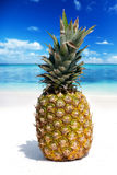 Fruit d'ananas sur la plage tropicale Photos stock