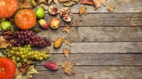 Fruit d'automne, bannière Photographie stock libre de droits