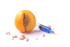 Fruit d'orange d'OGM Photo libre de droits