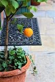 Fruit d'orange de citron Photo stock