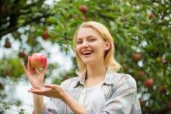 fruit d'?t? de r?colte de ressort verger, fille de jardinier dans le jardin de pomme vitamine et nourriture suivante un r?gime De image stock