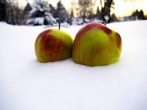 fruit dans la neige Photos stock