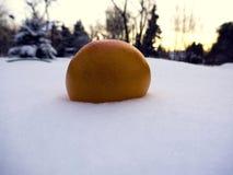 fruit dans la neige Photo stock