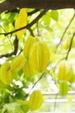 Fruit de caïmite ou fruit d'étoile Photos libres de droits