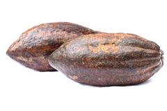 fruit de cacao d'isolement Photo libre de droits