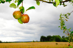 Fruit de campagne images stock