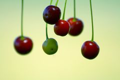Fruit de cerise photo stock
