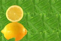 Fruit de citron Photos stock