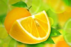 Fruit de citron avec des feuilles Photographie stock libre de droits